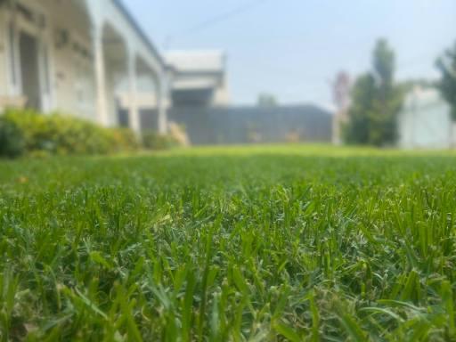 grass at swan